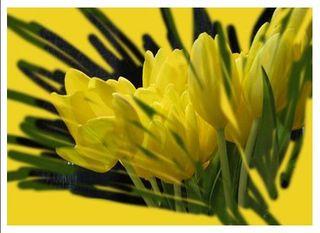 Spring postcard for web