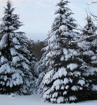 Snowy morning2 web